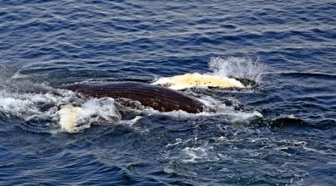 Whale~2