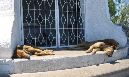 sleeping-dogs
